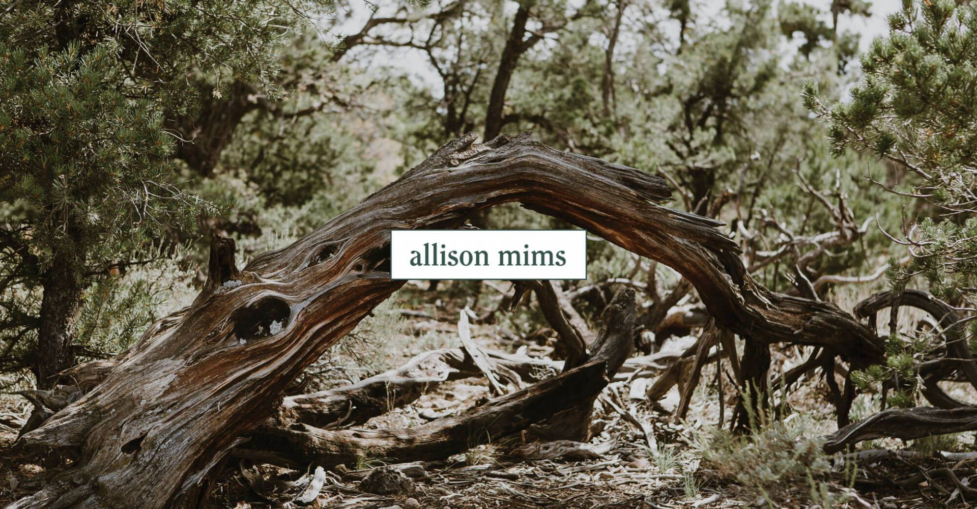 Allison Mims Photography Case Study