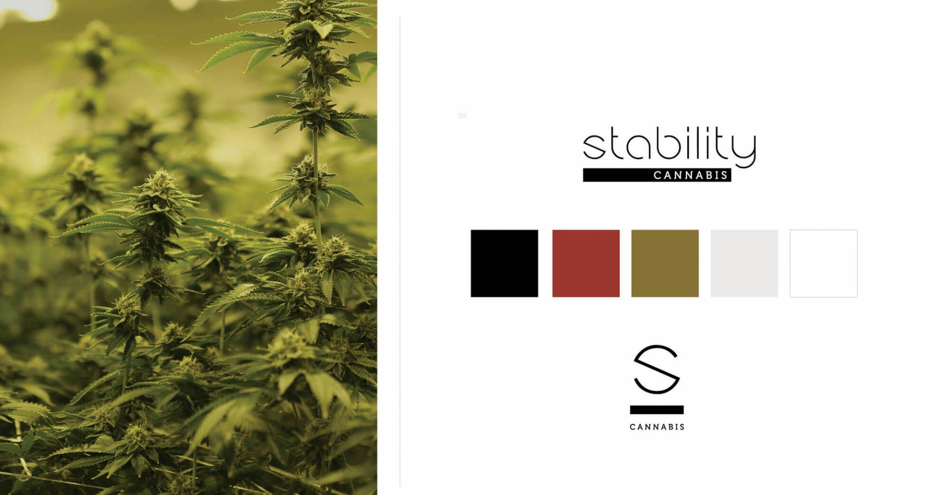 Stability Cannabis - Oklahoma's Cannabis Superstore